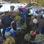 Riverbank Planting Action